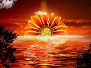 Soleil fleur