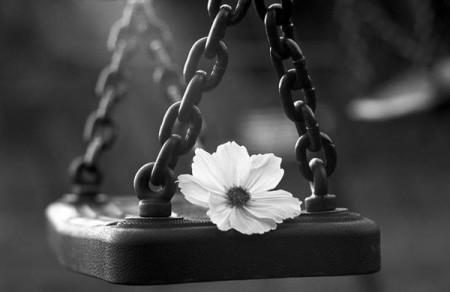 Solitude fleur