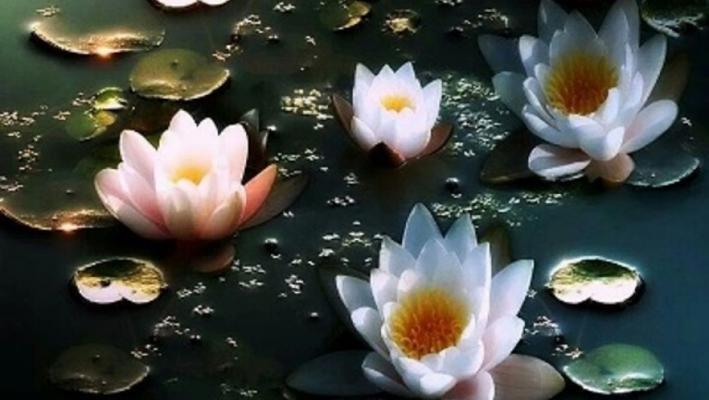 Spiritual lotus garden