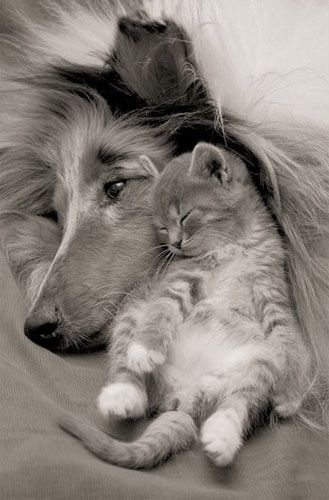 Tendresse chien chat