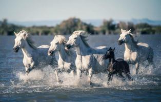 Totem cheval